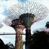 Super trees stock photo