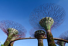 Super Trees at Gardens by the Bay Stock Image