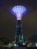Super Trees at Gardens by the Bay Stock Photography