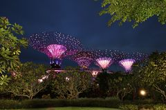 Super Trees at Gardens By The Bay, Singapore stock photography