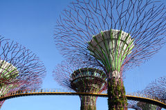 Super Trees at Gardens by the Bay in Singapore Stock Image