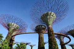 Super Trees at Gardens by the Bay in Singapore Royalty Free Stock Photos