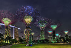 Super Trees Night Scene at Singapore Gardens by the Bay Stock Image