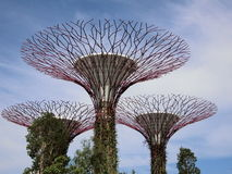 Super Trees. Singapore - August 2016 View of the super trees in the Gardens by the Bay in Singapore against blue sky and white clouds royalty free stock photo