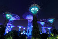 Super Trees at Singapore Gardens by the Bay.  stock photo