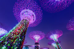 Super Trees of Singapore Royalty Free Stock Image