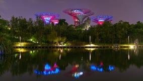 Super Trees of Singapore stock video