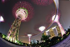 Super trees and skywalk at Gardens by the Bay Royalty Free Stock Photography