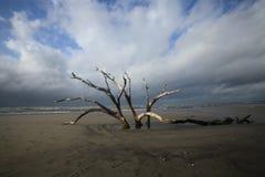 Superação inoperante da árvore do SC de Charleston da praia do insensatez foto de stock royalty free