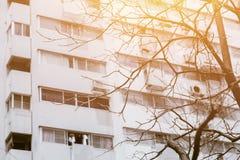 Superaqueça o tempo quente morrem árvore na crise urbana das alterações climáticas Fotografia de Stock