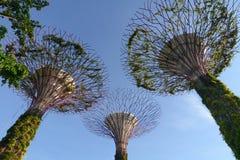 Superbäume an den Gärten durch den Schacht Lizenzfreies Stockbild