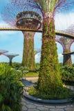 Superbäume in Singapur stockfotos