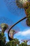 Superbäume und Gehweg schossen von unterhalb - Gärten durch die Bucht, Singapur lizenzfreies stockbild