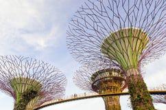 Superbäume und Skywalk lizenzfreie stockfotografie