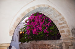 Superb ancient arch old stone with beautiful bougainvillea in ba Royalty Free Stock Images