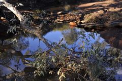 Outstanding Reflections of a Ghost Gum.. Superb blue sky reflections in still water after summer rain. Outstanding Reflections of a Ghost Gum in a small pool in stock images
