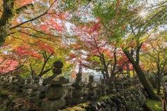 Superb view, fall color at Adashino Nenbutsu-ji, Japan in the au Royalty Free Stock Photo