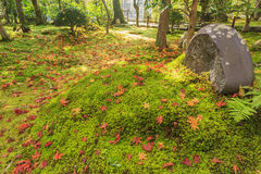 Superb view, fall color at Adashino Nenbutsu-ji, Japan in the au Royalty Free Stock Photo