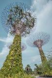 Superbaumwaldung Stockfoto