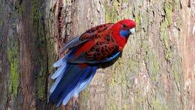 Superbird! Immagini Stock