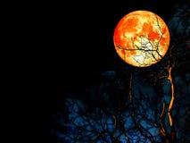 Superblutmond und -bewölkter Himmel Stockfotografie