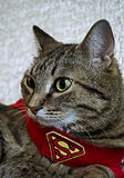 Supercat Royalty Free Stock Photos