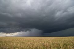 Supercell thunderstorm passes by a dry wheat field, releasing an intense core of rain and hail. Royalty Free Stock Photo