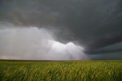 Supercellgewitter überschreitet durch ein Weizenfeld und gibt einen Strom des Regens und des Winds frei Stockfotografie