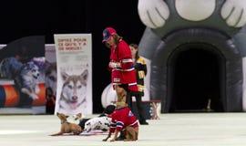 Superdogs Royalty-vrije Stock Afbeeldingen