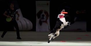 Superdogs Stock Fotografie