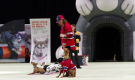 Superdogs Royalty Free Stock Images