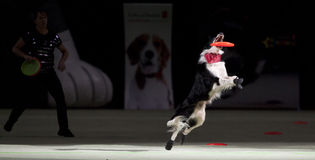 Superdogs Stock Photography
