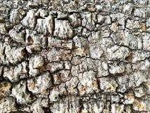 Superfície áspera do fundo velho da textura da árvore imagens de stock royalty free