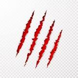 Superfície assustador do papel do leceration As garras do animal selvagem riscam a textura com fundo vermelho Borda de papel rasg ilustração stock