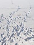 Superfície congelada do lago com pegadas humanas Fotos de Stock Royalty Free