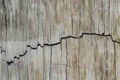 Superfície consideravelmente modelada do fóssil Imagem de Stock