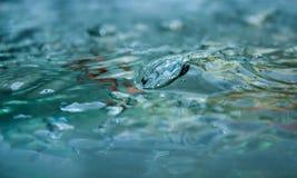 Superfície da água Foto de Stock