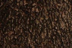 Superfície da árvore Foto de Stock