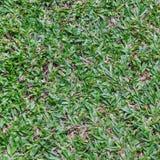 Superfície da grama verde Imagens de Stock