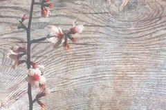 Superfície da madeira com pátina Fotografia de Stock