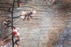 Superfície da madeira com pátina Imagem de Stock