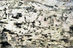 A superfície da madeira velha comida por sem-fins e por insetos Fotos de Stock Royalty Free