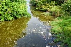 A superfície das reservas de água entre árvores é contaminada com os restos e os resíduos sólidos no formulário das manchas foto de stock