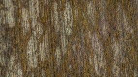 Superfície de madeira do painel Imagens de Stock Royalty Free