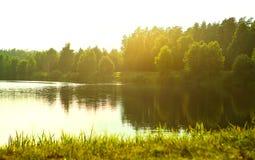 Superfície de madeira e floresta ensolarada Fotografia de Stock
