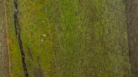Superfície de madeira musgoso do painel Imagens de Stock Royalty Free