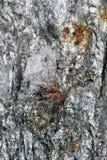 Superfície de mineral quebrado com Sprinklings vermelhos Imagens de Stock Royalty Free