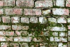 A superfície de uma parede de tijolo velha coberta com o musgo Imagem de Stock Royalty Free