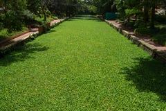 A superfície do canal de água municipal é coberta com as algas imagem de stock royalty free
