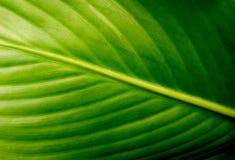 Superfície do fundo da folha verde Imagem de Stock Royalty Free